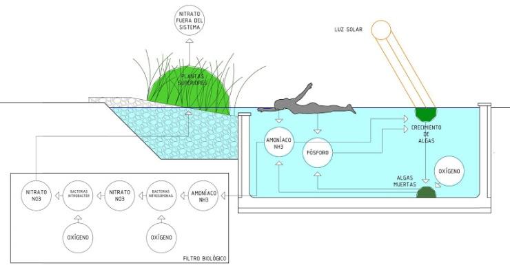 Piscina natural, piscina naturalizada, biopiscina Filtro biológico urbarbolisimo