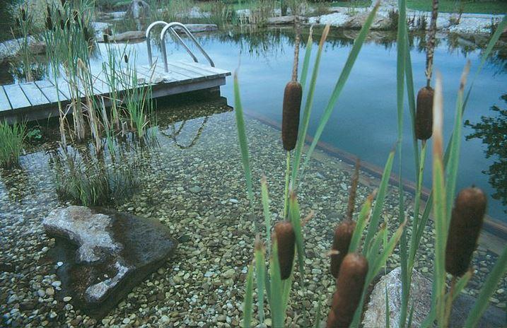 Piscina naturalizada, piscina biologica, biopiscina, Piscina natural aquanet 3