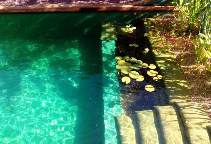 piscinas naturales ecologicas baño ecologico fuente el mueble.com