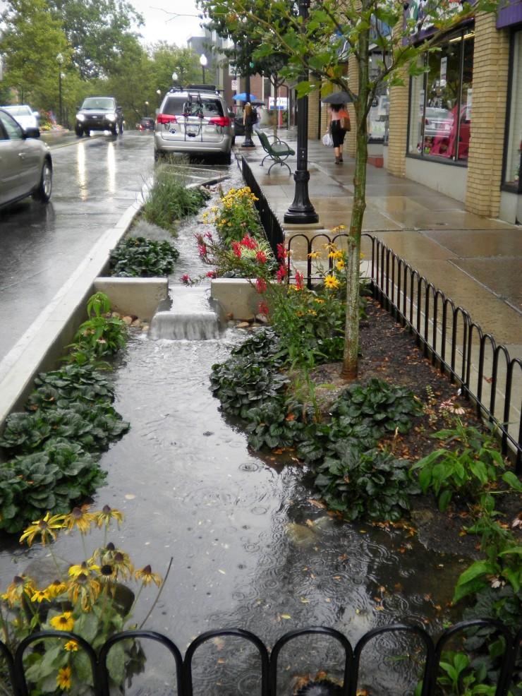 Allen street rain garden 3
