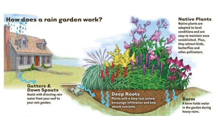Como funnciona un jardin de lluvia (howard, estado de Maryland)