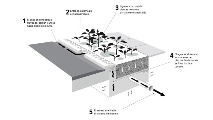 Intendencia de Montevideo Esquema jardín de lluvia