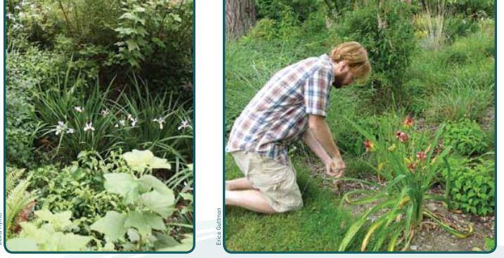 Rain Garden Handbook for western 18 (Trabajos manuales).JPG