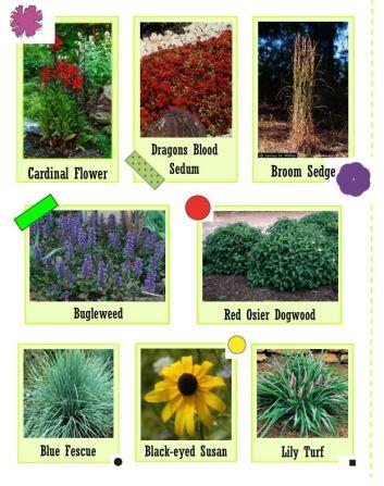 South allen street garden plant legend